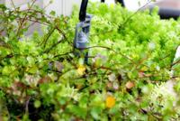 自動散水機で楽々園芸。なぜ早く買わなかったか後悔するレベル──コデラ総研 家庭部(72)